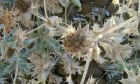 OasiVendicariflora_1.jpg